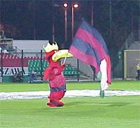 Gryf z flagą w barwach Legii i Pogoni - fot. Woytek